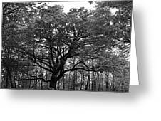 Green Giant In Black And White Greeting Card
