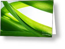 Green Grass Background Greeting Card