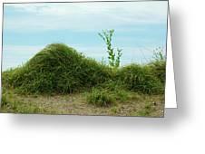 Green Grass Mountain Greeting Card