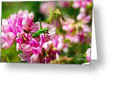 Green Grasshopper On Pink Flowers Greeting Card