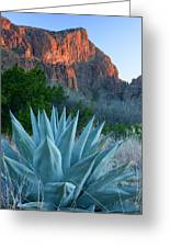 Green Gulch Agave Greeting Card by Eric Foltz