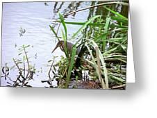 Green Heron Greeting Card by Al Powell Photography USA