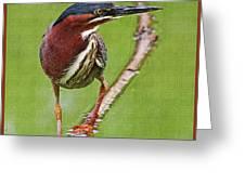 Green Heron At Gilbert Riparian Preserve Greeting Card