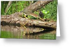 Green Heron Fishing 2 Greeting Card