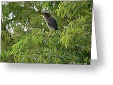 Green Heron In Tree Greeting Card