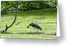 Green Heron Lunch Greeting Card