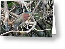 Green Heron On A Branch Greeting Card