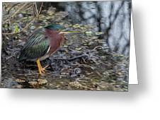 Green Heron Patience Greeting Card