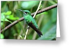 Green Crowned Brilliant Hummingbird Greeting Card