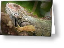 Green Iguana Costa Rica Greeting Card