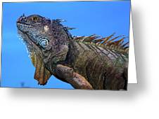 Green Iguana Greeting Card