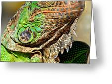 Green Iguana Series Greeting Card