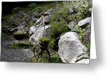 Green In Rock Garden Greeting Card