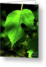 Green Is The Mulberry Leaf Greeting Card