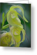 Green Lady Slipper Orchid Greeting Card