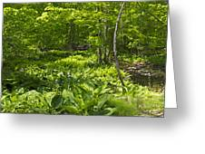 Green Landscape Of Summer Foliage Greeting Card