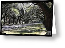 Green Lane With Live Oaks - Black Framing Greeting Card
