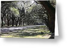 Green Lane With Live Oaks Greeting Card