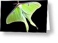 Green Lantern Moth Greeting Card