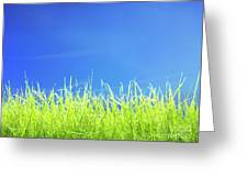 Green Lawn Grass Under Blue Sky Greeting Card