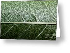 Green Leaf Geometry Greeting Card by Ryan Kelly