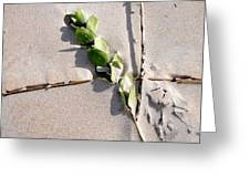 Green Leaf On Beach Greeting Card