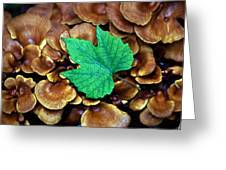 Green Leaf On Fungus Greeting Card