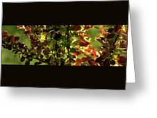 Green Leaf Red Leaf Pano Greeting Card