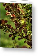 Green Leaf Spotlight Greeting Card
