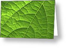 Green Leaf Structure Greeting Card