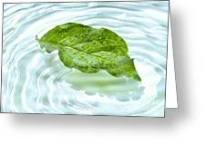 Green Leaf With Water Reflection Greeting Card