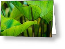 Green Leaves At Cantigny Greeting Card