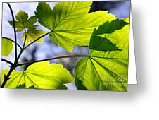 Green Leaves Greeting Card by Carlos Caetano