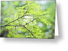 Green Leaves In The Forest Greeting Card