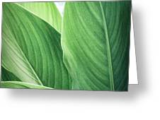 Green Leaves No. 2 Greeting Card by Todd Blanchard