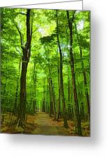 Green Light Harmony - Walking Through The Summer Forest Greeting Card
