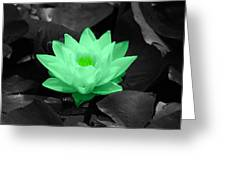 Green Lily Blossom Greeting Card