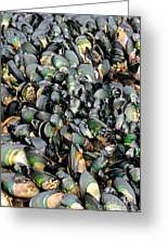 Green Lipped Muscles Greeting Card