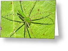 Green Lynx Spider Greeting Card