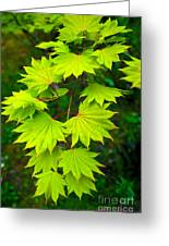 Green Maple  Greeting Card