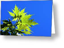 Green Maple Leaves Greeting Card