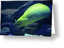 Green Moray Eel Greeting Card