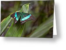 Green Moss Peacock Butterfly Greeting Card