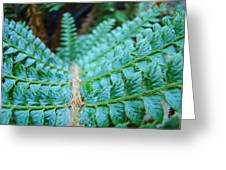 Green Nature Forest Fern Art Print Baslee Troutman  Greeting Card