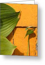Green On Orange 4 Greeting Card