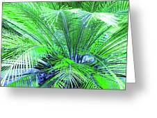 Green Palm Greeting Card