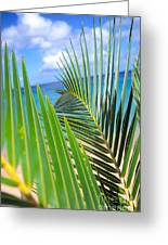 Green Palm Leaves Greeting Card