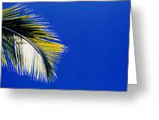 Green Palms Blue Sky  Greeting Card