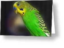 Green Parakeet Portrait Greeting Card
