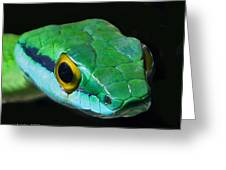 Green Parrot Snake Greeting Card